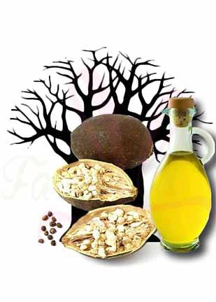 KAËL photo ingredient Huile de baobab