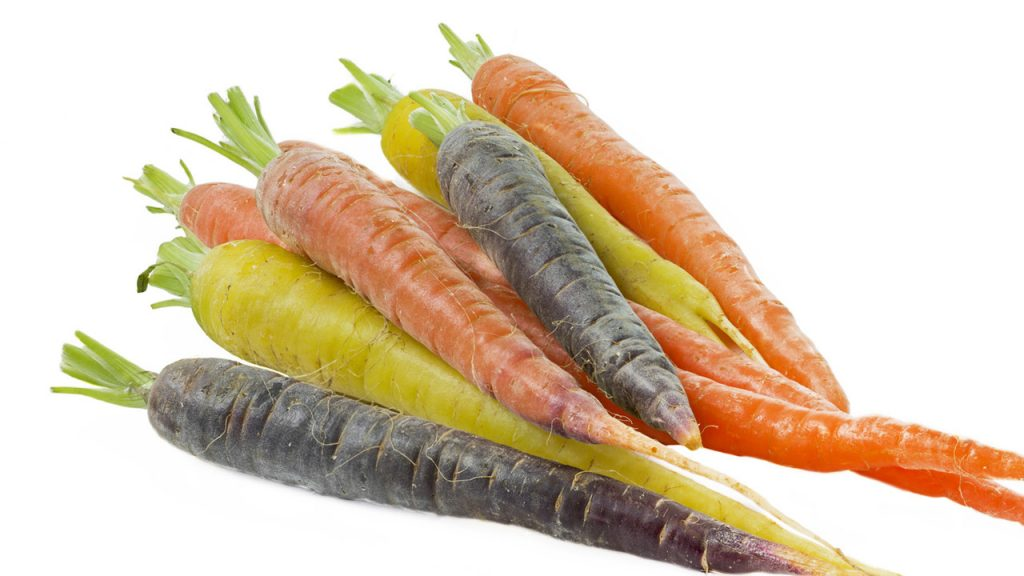 KAËL photo ingredient photo carottes sauvages