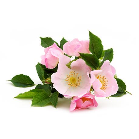 KAËL photo ingredient rose-musquee